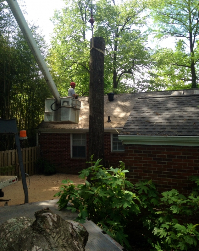 Lains Tree Services_4