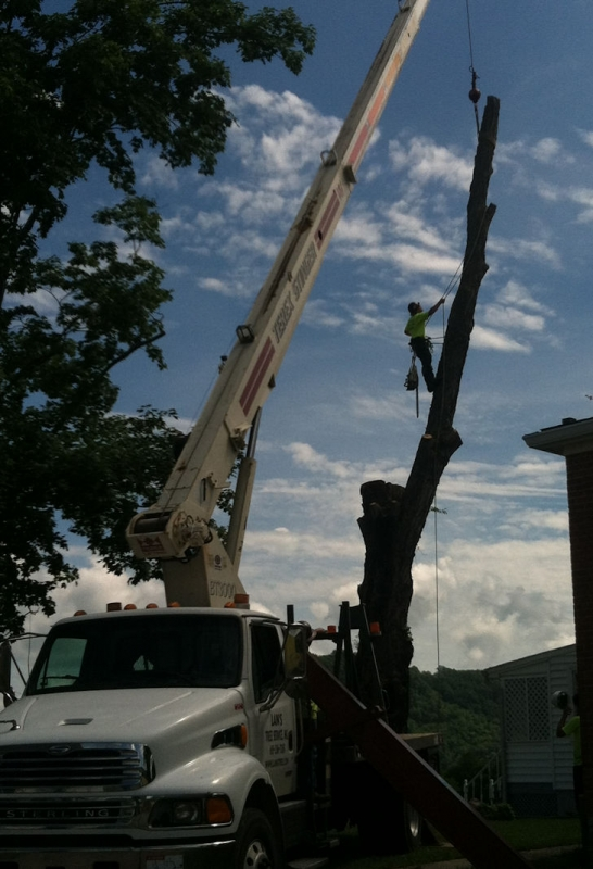 Lains Tree Services - Offering Professional Tree Service Since the 1950's_1