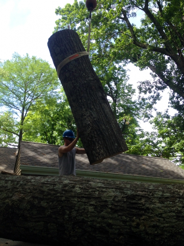 Lains Tree Services_5