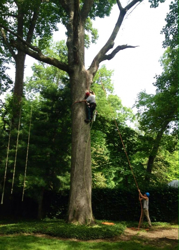 Lains Tree Services - Offering Professional Tree Service Since the 1950's_5