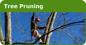 Lain's Tree Service - Tree Pruning
