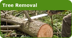 Lain's Tree Service - Tree Removal