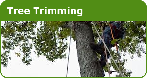 Lain's Tree Service - Tree Trimming