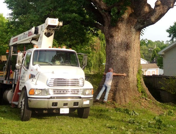 Offering Professional Tree Service Since the 1950's