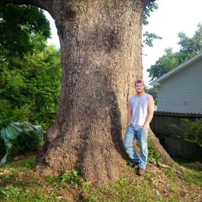 Lains Tree Services - Offering Professional Tree Service Since the 1950's_2