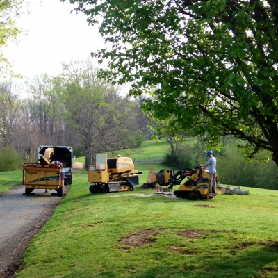 Lains Tree Services - Offering Professional Tree Service Since the 1950's_8