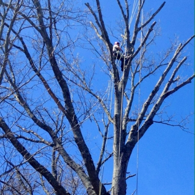 Lains Tree Services_1